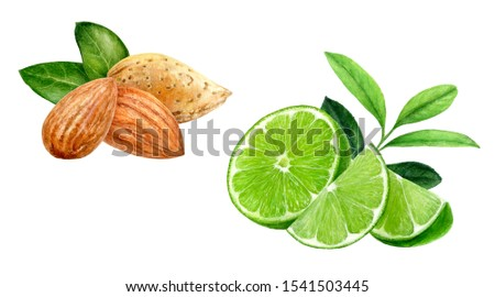 Almond lime set composition watercolor isolated on white background