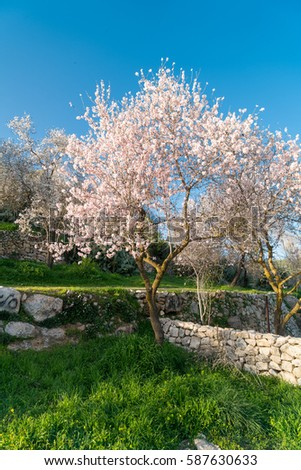 free photos branch of an almond tree blooming in february avopix com