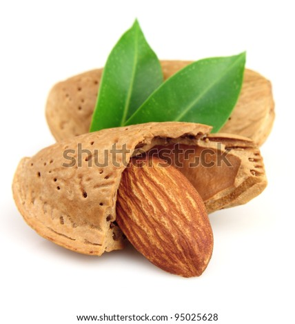 Almonds in closeup with leaves