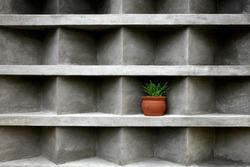 Aloe in a ceramic pot, placed in a niche on a concrete wall