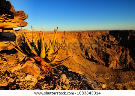 Aloe in the cliffs on the Fish River Canyon #1083843014