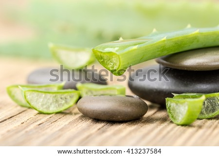Aloe Vera (Aloe barbadensis Mill.,Star cactus, Aloe, Aloin, Jafferabad or Barbados) a very useful herbal medicine for skin treatment and use in spa for skin care. #413237584