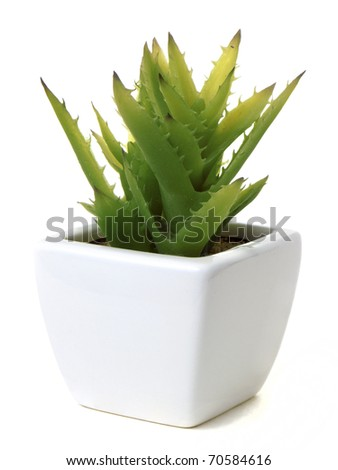 Aloe vera cactus in a sqare pot, isolated on white background