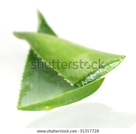 Aloe vera, close up of open leaves