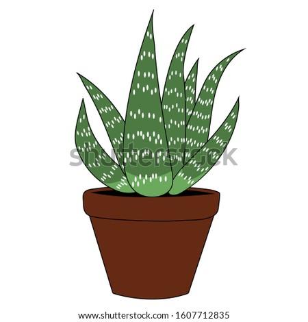 Aloe vera in a clay pot cartoon. Isolated stock botany illustration