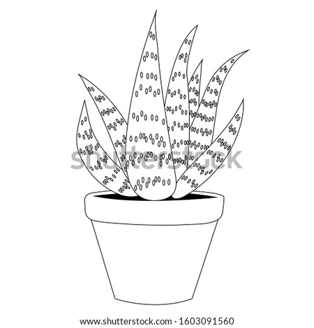 Aloe vera in a clay pot outline. Isolated stock botany illustration