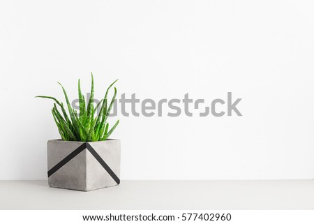 Aloe vera in cement flower pot on a shelf in modern interior.  #577402960