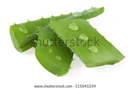 Aloe Vera leaves with water drops isolated on white background