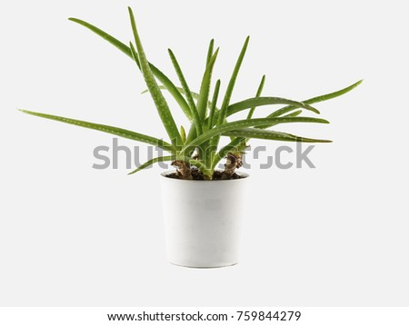 Aloe vera plant in pot isolated on white background #759844279