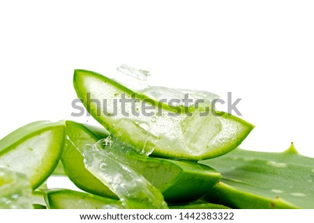 Aloe Vera Slices (Aloe barbadensis Mill.,Star cactus, Aloe, Aloin, Jafferabad or Barbados) fresh leaf isolated on white background, a very useful herbal medicine for skin care and hair care and for in #1442383322