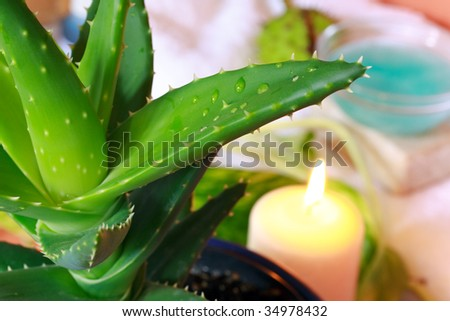 Aloe  with water drops,a wellness scene