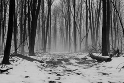 Alone. A remote winter forest immersed in fog with trail leading into the unknown.