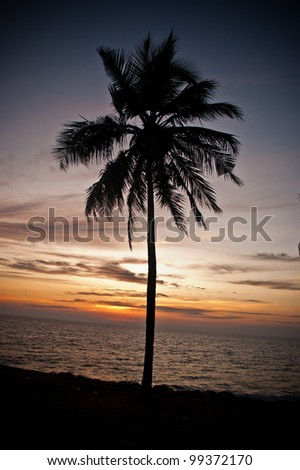Alone coconut palm at Arabic  see
