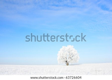 Alone frozen tree and clear blue sky