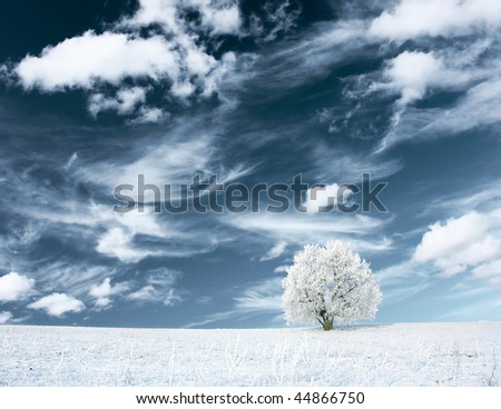 Alone frozen tree and clouds on blue sky