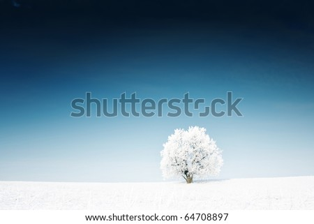 Alone frozen tree in a winter field and deep blue clear sky