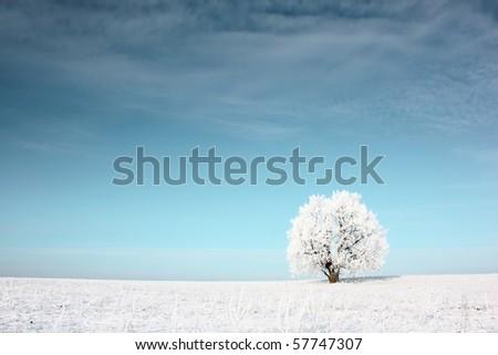 Alone frozen tree in snowy field