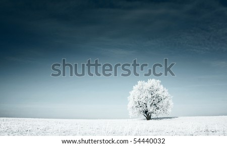 Alone frozen tree in snowy field and dark blue sky