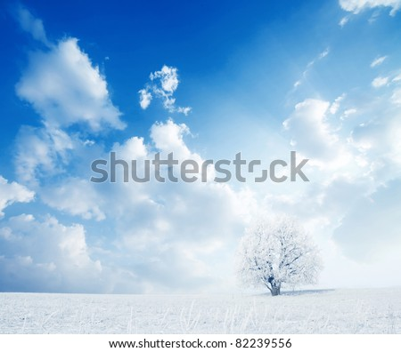 Alone frozen tree in winter snowy field