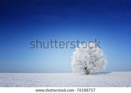 Alone frozen tree on winter field and blue sky with rare clouds #76188757