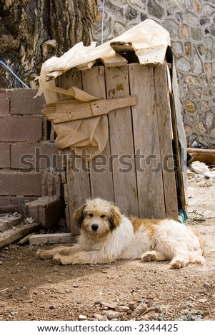 alone homeless dog