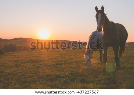 Stock Photo alone horse on meadow in sunset