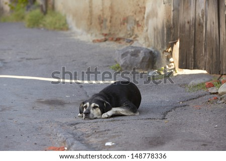 Alone old dog is lying on street - selective focus