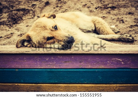 Alone old dog is lying to the outside.