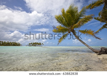Alone palm tree on blue lagoon front of a desert island in tropics