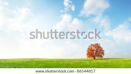 Alone red autumn tree on a green meadow and blue sky with clouds #86544817