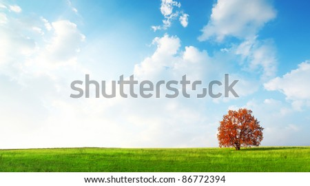 Alone red autumn tree on a green meadow and blue sky with clouds