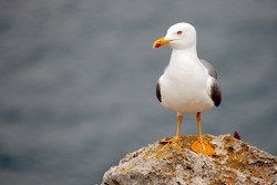 alone seagull perched on a rock