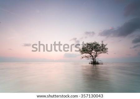 Alone tree #357130043