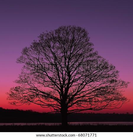 Alone Tree at night