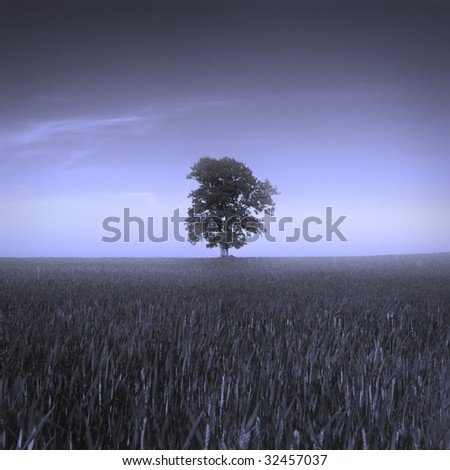 Alone tree in a field in blue color