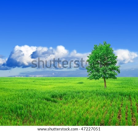 alone tree in a green field - stock photo
