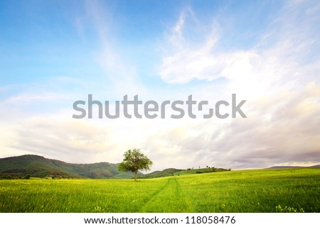 alone tree in clear green and blue nature landscape