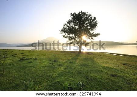 Alone tree in grass field #325741994