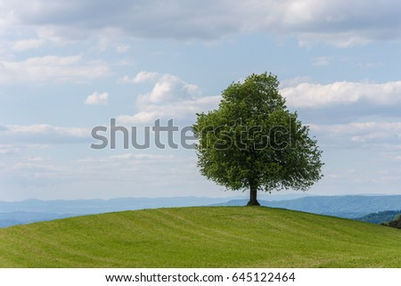 Alone tree on green meadow and cloudy blue sky in summer