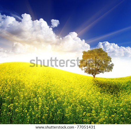 Alone tree on the beautiful field of yellow flowers