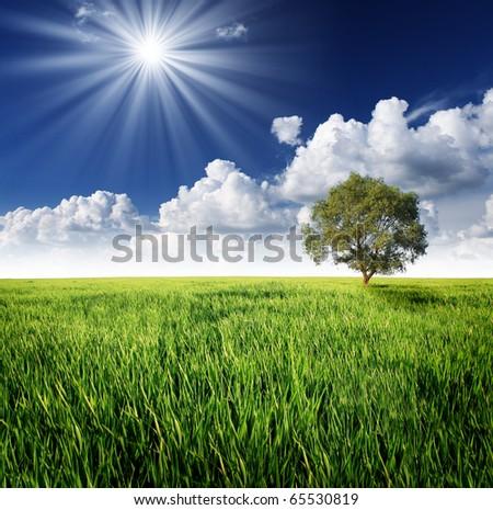Alone tree on the green meadow under clowdy sky