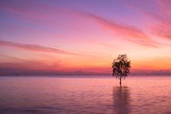 Alone tree with Beautiful sky sunrise