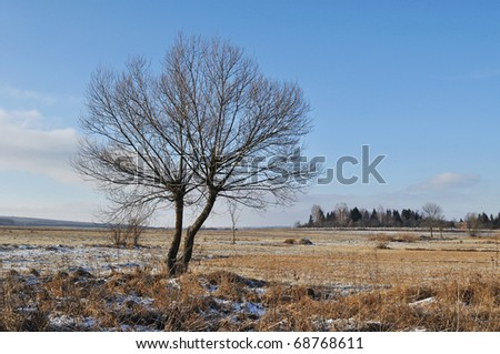 alone winter tree