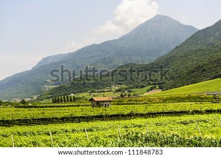 Along the cycle lane of the Adige valley near Trento (Trentino Alto Adige, Italy) at summer