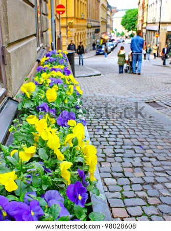 Along the streets of The Old Town (Gamla Stan) in Stockholm. Flowers like colors national flag of Sweden.
