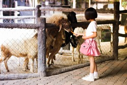 Alpaca girls are feeding at the zoo.