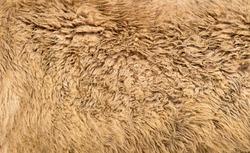 Alpaca textured