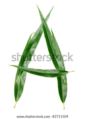 """Alphabet from the leaves of willow. Letter """"A"""""""