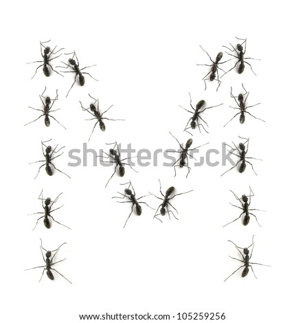 alphabet letters spelled by ant in line