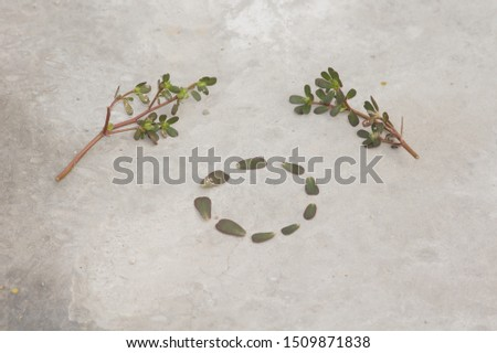 Alphabetical letter 'O' with leaf #1509871838